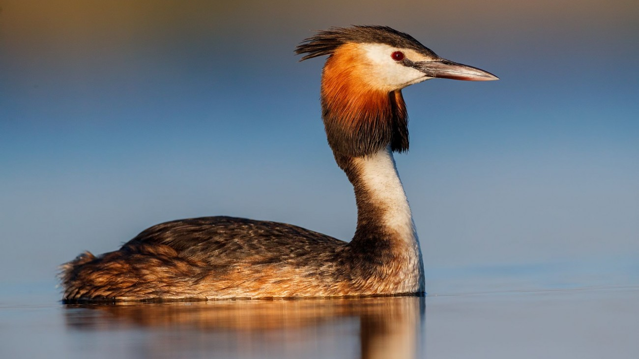Birds of Central Spain Photography